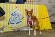 A dog posing in front of the Fisher's Island Lemonade stand
